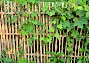 http://www.dreamstime.com/stock-photography-bamboo-fence-surrounded-ivy-covered-many-species-agency-beautiful-natural-lined-green-hills-image40934162