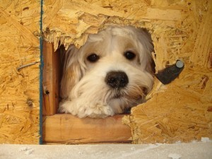 Pets and Remodeling Projects-Design Build Pros