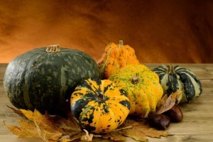 Pumpkins and gourds from Organic Gurlz Gardens of Fort Wayne Indiana (2)