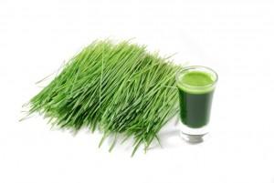Shot glass of wheatgrass