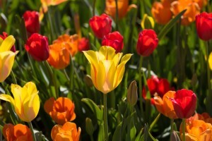 Tips for Prepping Perennials for Winter - Organic Gurlz Gardens Fort Wayne Indiana (1)
