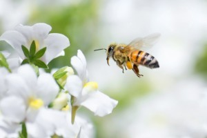 health benefits of honey - Organic Gurlz Gardens Fort Wayne Indiana