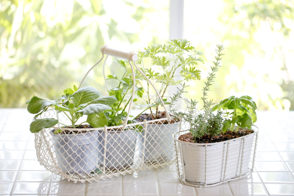 How To Make An Indoor Herb Garden Design Build Pros
