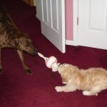 Slugger and Buddy playing and competing