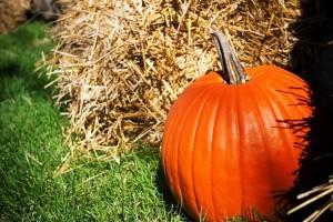 Health benefits of a pumpkin smoothie recipe - Organic Gurlz Gardens Fort Wayne Indiana