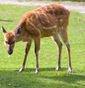 Deer eating your garden - Organic Garden Gurlz Fort Wayne, Indiana