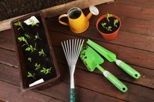 gardening in containers - Organic Gurlz Gardens