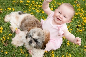 Herbal medicine and remedies for dogs from Organic Gurlz Gardens Fort Wayne Indiana