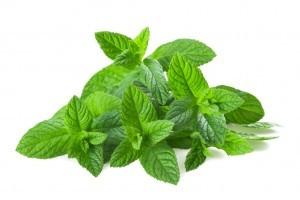 peppermint as an herbal remedy for heartburn ~ Organic Gurlz Gardens
