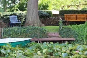 Ground ivy in garden and on house - Organic Gurlz Gardens Fort Wayne Indiana (3)