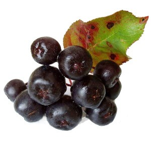Health benefits of bilberry - Organic Gurlz Gardens Fort Wayne Indiana