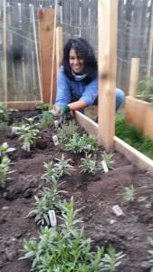 winterize your garden - Organic Gurlz Gardens of Fort Wayne, Indiana (1)