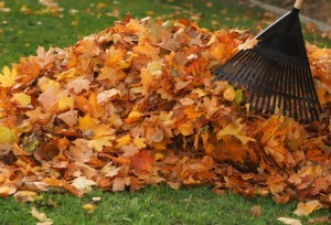 What to do with leaves on lawn - Organic Gurlz Gardens Fort Wayne Indiana