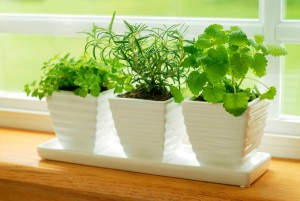 Make an indoor herb garden - Organic Gurlz Gardens (1)