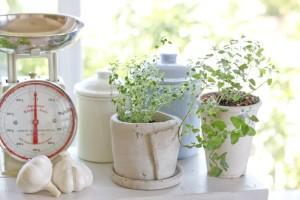Make an indoor herb garden - Organic Gurlz Gardens (3)