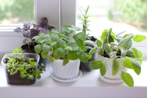 incorporationg a garden in your home ~ Organic Gurlz Gardens (2)